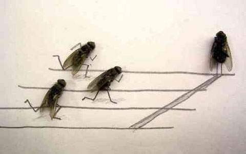 Fliegenrennen